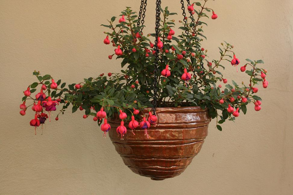 Coiled Hanging Planter