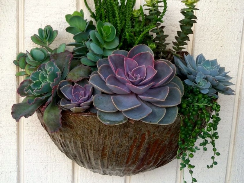 Contemporary Wall Planters