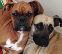 dogs-bio-pic-cropped2